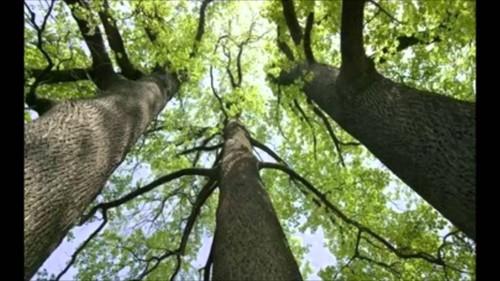 3 árvores.jpg