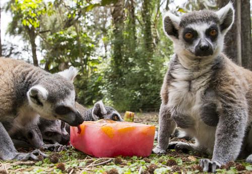 2015-06-20-Lemure.jpg