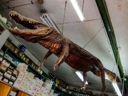 casa crocodilo