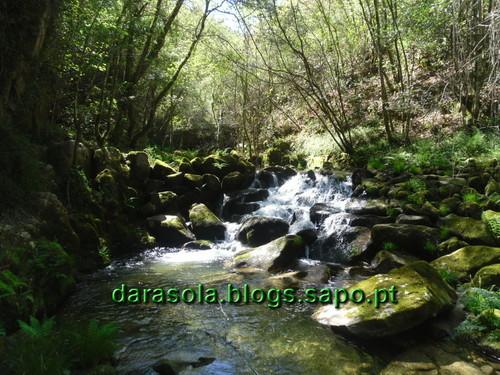 Oliv_Frades_Levadas_0031.JPG