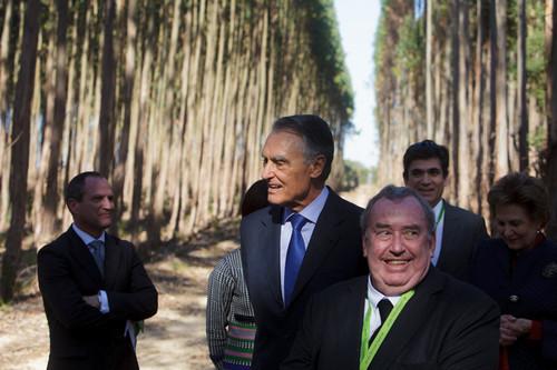 cavaco eucaliptal.jpg