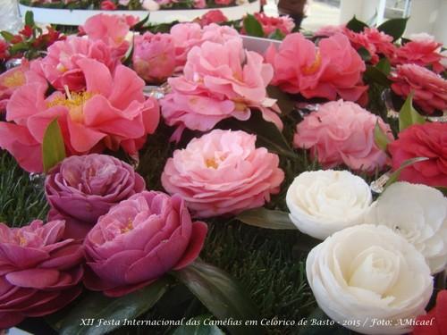 11.2 - Festa Internacional das Camélias em Celori
