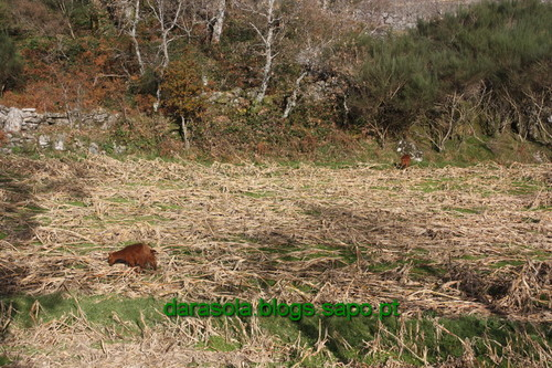 Biodiversidade_Freita_17.JPG
