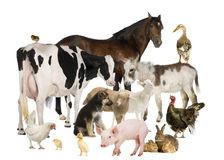 group-farm-animals-23770927.jpg