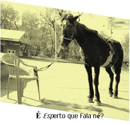 malandro.jpg