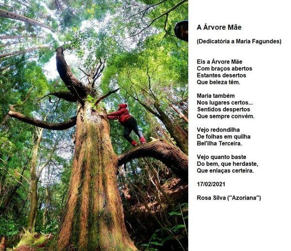 a árvore mãe