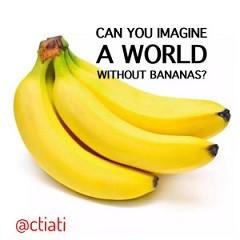 Bananas-300x300-1.jpg