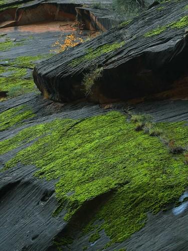 zion-canyon-moss.jpg