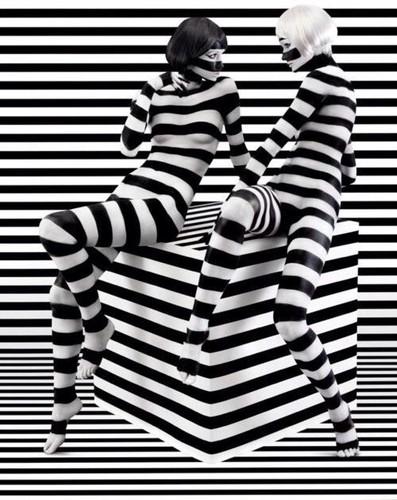 zebre2.jpg