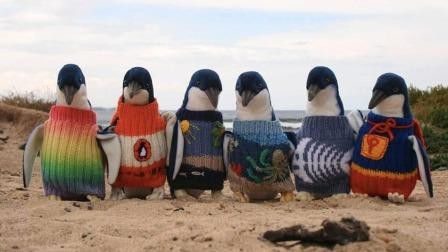 pinguins_SAPO6.jpg