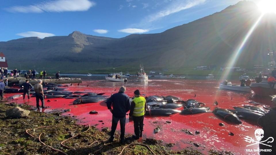 Matança das baleias.jpg