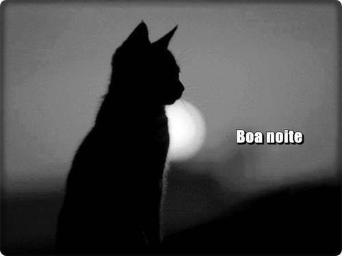 boa noite gato.jpg