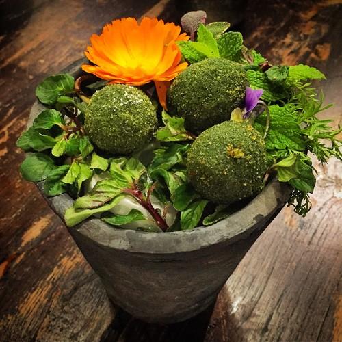 Ouriços, ovos verdes de codorniz.JPG