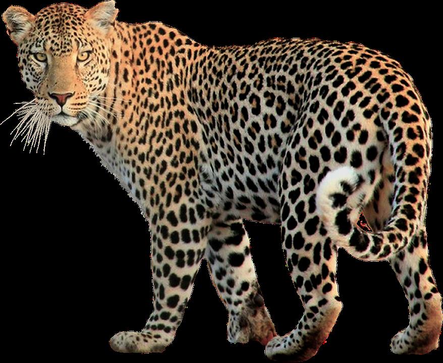 wildlife-3232671_960_720.jpg
