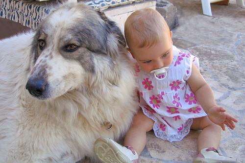 cão e criança.jpg