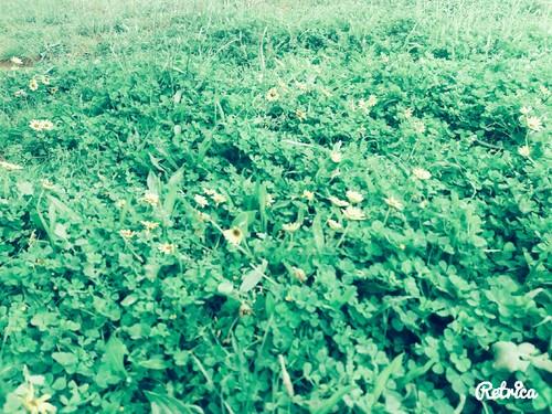 13_A3C_Mar Verde.jpg
