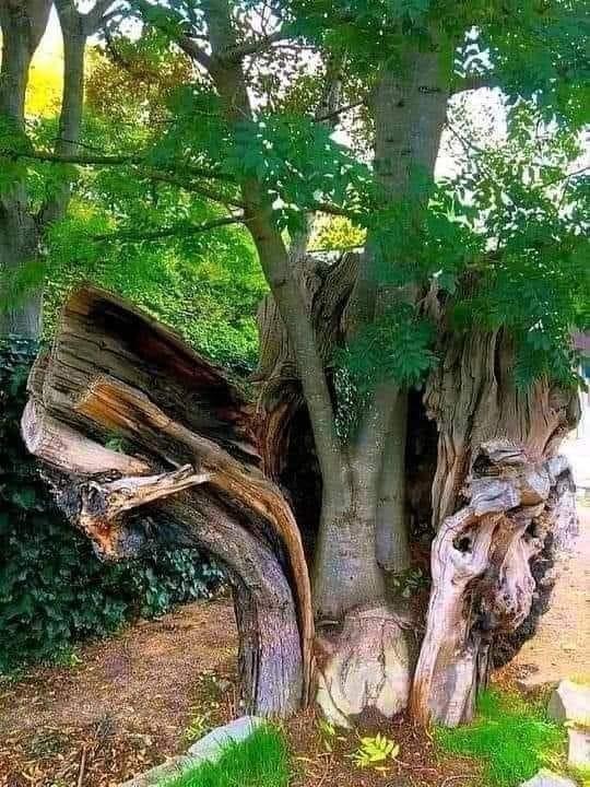 A árvore que se negou a morrer.jpg