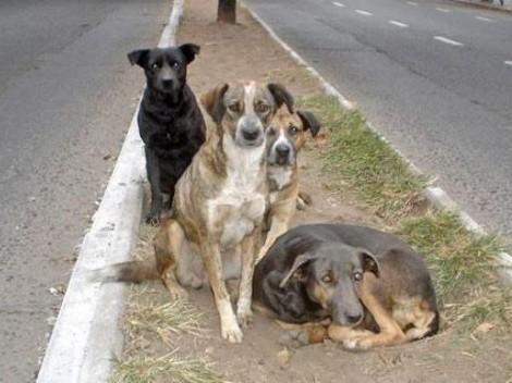 cães abandonados.jpg