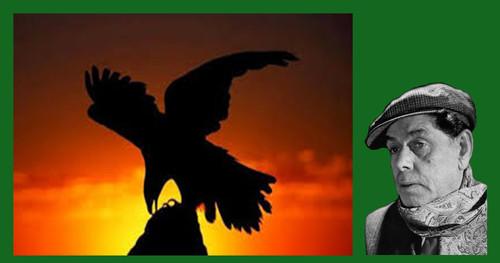 Marceneeiro águia..jpg