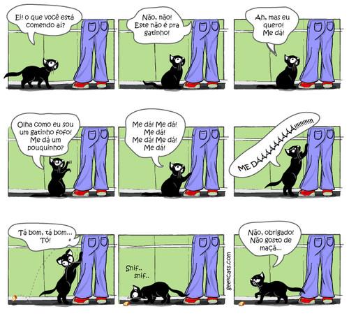 veterinario-gatos-caxias-43.jpg