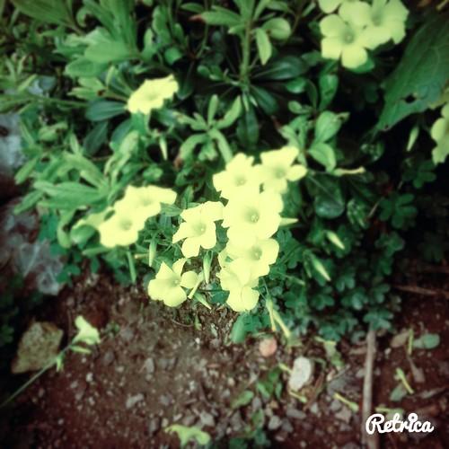 42_A3C_Jardim.jpg