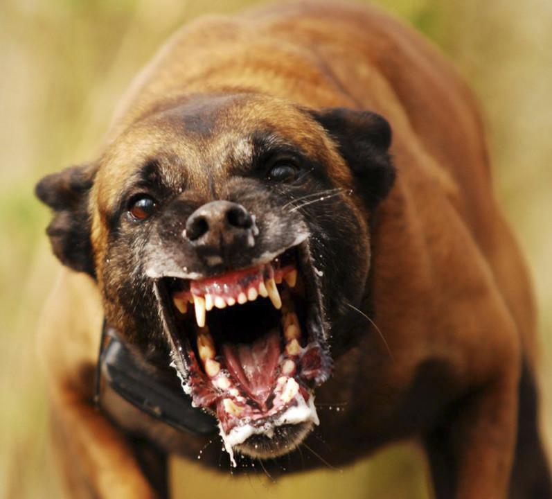 Cães raivosos.jpg