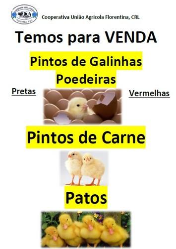 Pintos.jpg