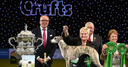 2018-Crufts-Dog-Show-Day-Four-Best-In-Show.jpg