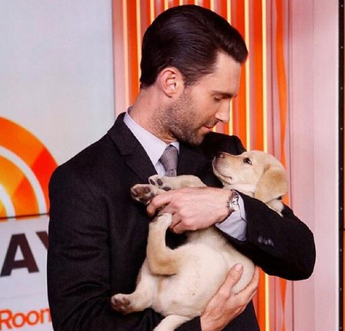 adam-levine-cradles-cute-puppy-on-today-show-04.jp