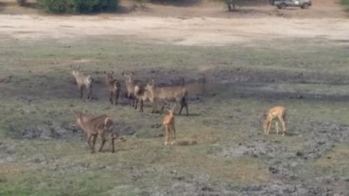 Botswana 276.jpg