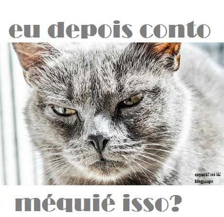 cat-334383_960_720.jpg