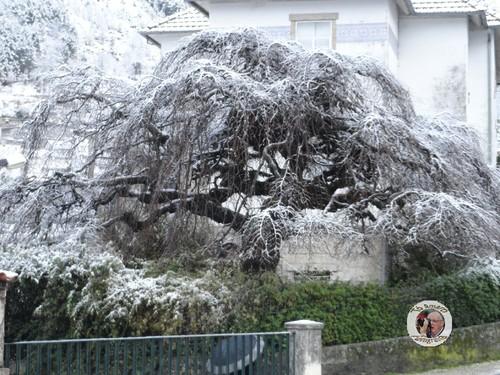Fotos de neve em Loriga 007.JPG
