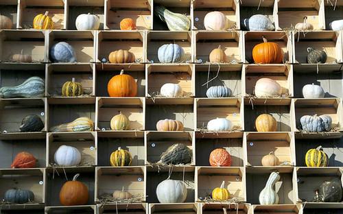 potd-pumpkins_3064196k.jpg