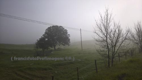 Manhãs de nevoeiro.jpg