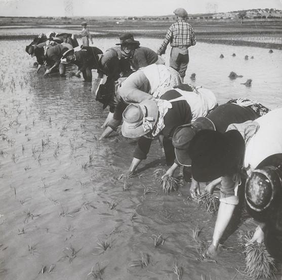 Mulheres-cultivo-arroz-Alentejo_VNR_site-destaque.