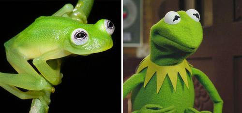 kermit-frog-lookalike-discovered-diane-bare-hearte