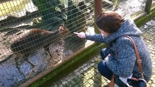 Zoo da Maia - veado e mana