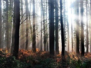 web-trees-pa.jpg