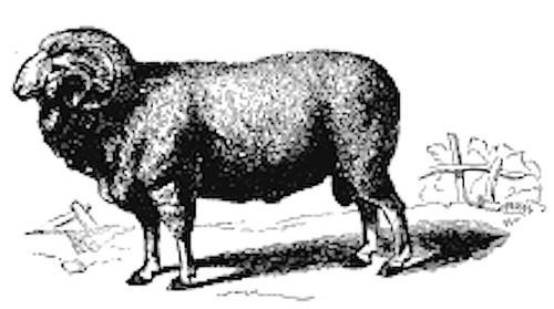 carneiro.png