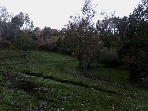 peace garden (3).JPG