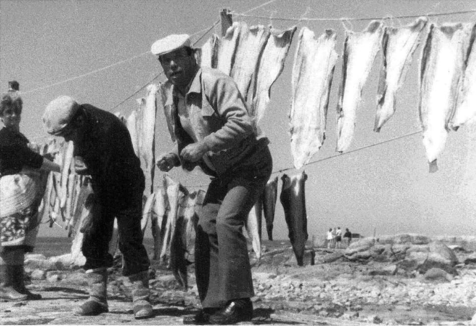 52 - Peixe a secar no molhe norte.jpg