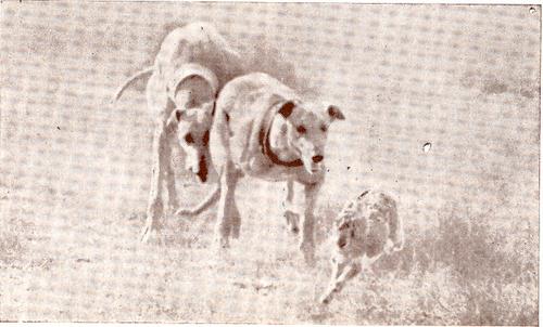 mundo canino 1972.png