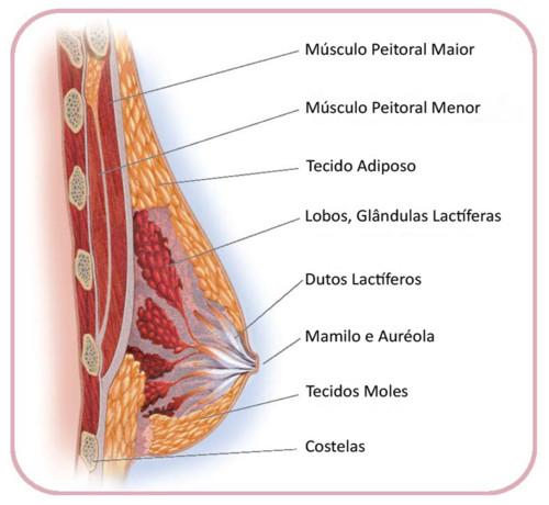 anatomia20da20mama_3.jpg