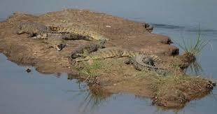 crocodile river3.jpg