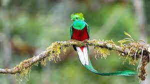 quetzal1.jpg