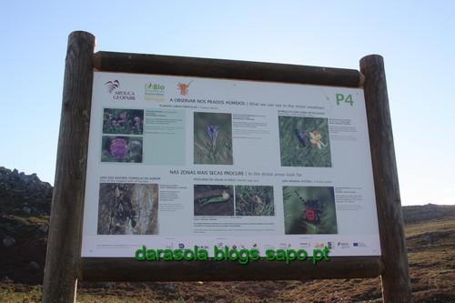 Biodiversidade_Freita_12.JPG