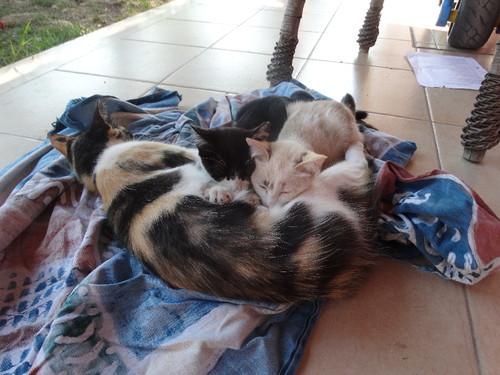 gatinhos a mamar.JPG
