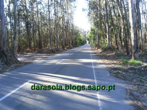 Gonde_Estarreja_13.JPG