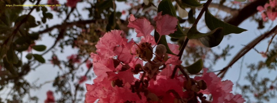 flores rosa pt.jpg