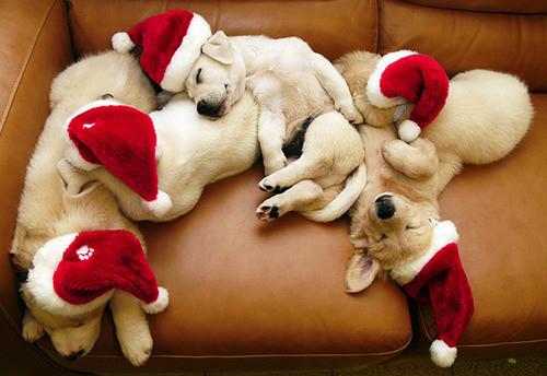 feliz-natal-zzzz.jpg